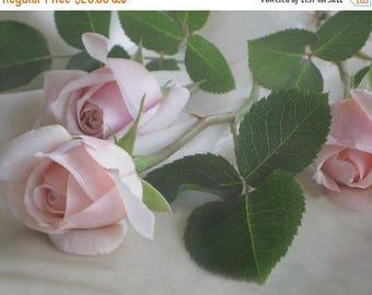 CIJ SALE Rose Bouquet Photo, Pink Roses for Mom, Susan G. Komen Donation, Cancer Memory Print, Fine Art Decor, Rose Wall Decor, Romantic Fin