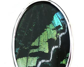 Green Banded Urania Leilus Butterfly - Moth - Large Oval Pendant