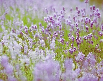 Photo of Lavender, Flower Photograph, Home Decor, Summer Garden Print, Dreamy Art, Wall Decor, Fine Art Photography, Purple, Green