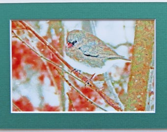Matted 4x6 Snow Bird Winter Wildlife Nature Photography Signed Artwork Print Home Decor Small Wall Art