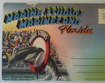 Vintage 40s Fold Out Postcard Booklet Marineland Florida Marine Studios UNUSED
