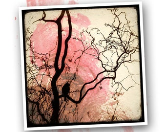 Bird on branch - Nature - photo art signed 20x20cm