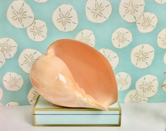 "Seashell - Large Natural Melo Diadema Shell 9""-10""  - beach coastal sea shells seashells"