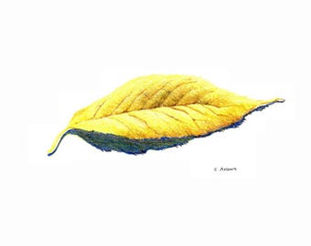 Original 5 x 7 Colored Pencil Sketch of an Autumn Leaf