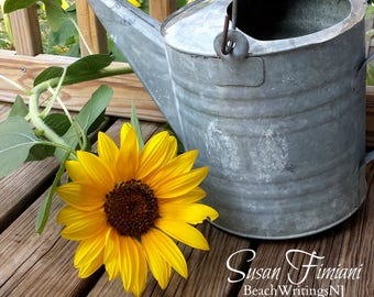 Sunflower and Watering Can 5x7 8x10 Printed fine art photo