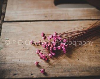 Petite Pink Flowers