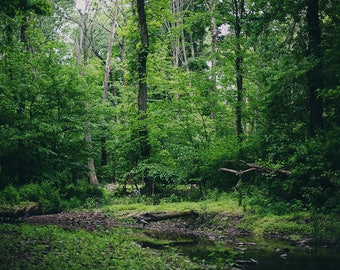 In the Woods - Fine Art Photograph, Wall Art, Room Decor, Woods, Trees, Nature