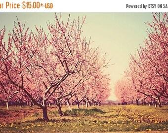 Nature photography Springtime romance Fine Art Photography Whimsical wall art botanical art prints Pink Tree Cherry blossom orchard Nursery