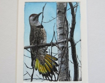 Northern Flicker hand tinted photo etching