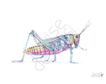 Grasshopper print of watercolor painting, GH23017, A4 size, Grasshopper watercolor painting print, Insect print, art for baby, nursery print