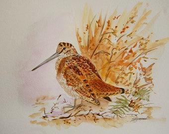 bécasse des bois, animaux, oiseaux, bois, nature, aquarelle