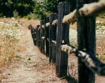 Country Fence Photo, Farmhouse Decor, Rustic Photography, Wildflower Photograph, Countryside Photo, Queen Ann's Lace, Rustic Wood, Farm Art
