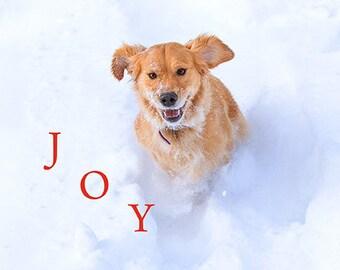 Set of Holiday Joy Retriever Holiday Photo Cards
