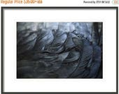 ON SALE Crow Feathers, Feathers, Black and Blue Feathers, Fine Art Photography, Crow Feather, Surreal, Crow Art, Home Decor