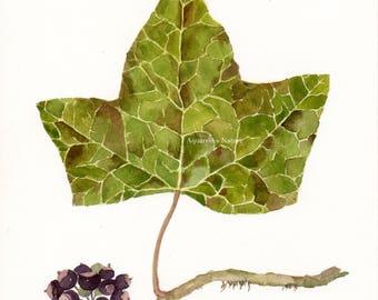 Ivy leaf with black berries, original watercolor painting, Leaf art, green leaves,  leaf painting, black berries, creeper, green ivy leaf