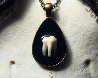 Raccoon molar tooth necklace