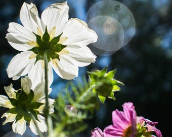 Digital Download Floral Sunbeam