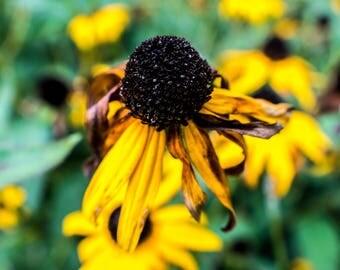 Digital Download Flower Macro