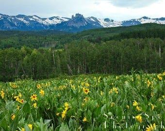 Aspen, Sunflowers, Castles, Rocky Mountains, Summer, Crested Butte, Colorado - Fine Art Photograph