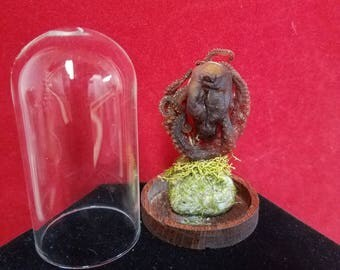 Taxidermy Octopus Glass dome display-Nautical-Aquatic-Ocean-Beach-Marine-Decor