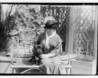 French Bull Dog Club of America Show at the Hotel Astor, 1914, New York City
