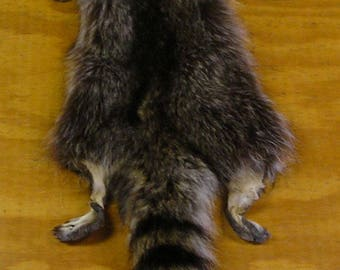 XXXLarge Wyoming Raccoon Pelt with Feet & Claws