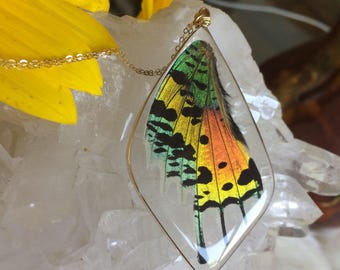 Real Sunset Moth Wing Necklace, Ethical Butterfly Jewelry