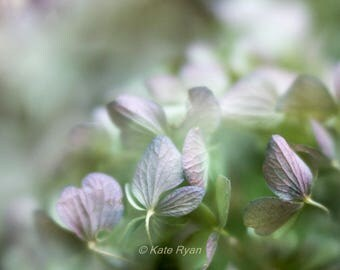 Green Purple Hydrangeas Print, Minimalist Wall Art, Soft Dreamy Floral Art, Fine Art Flower Photo, Bedroom Wall Art, Bathroom Decor, Spa Art