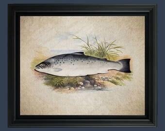 Vintage Salmon Fish Illustration - Fish Art - Trout art - Fish Illustration - Salmon- Vintage Salmon - Salmon Fishing- Fishing Art #C-028