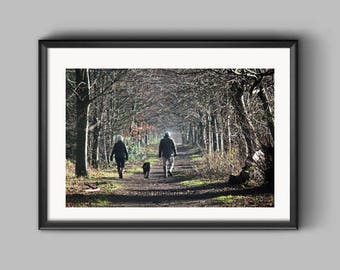 Big Wood, Erddig, an Erddig Countrypark Woodland Walk in the Winter Landscape Photograph.
