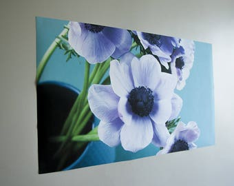 Poster anémones blanches photo florale grand format