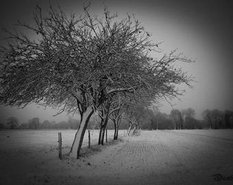 Photograph of trees in the snow in black and white