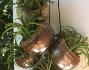 Ceramic air plant holder with FREE air plant