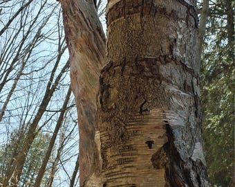 Photography Beautiful Bark