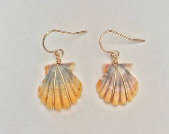 Wire Wrapped Sunrise Shell Earrings; 14k Gold Filled; Seashell; Boho