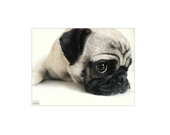 pug, dog lover, pug gift, living room decor, dorm room, mother's day gift, housewarming gift, art for child's room, father's day gift,