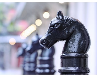 New Orleans, Louisiana, hitching post print, French Quarter, fine art photography, travel photography, street photography, black horse