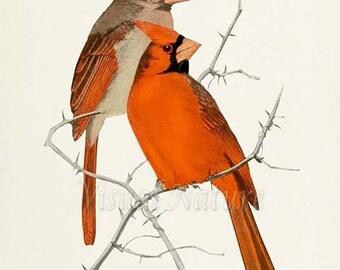 Cardinal Bird Print, Bird Art Print, Bird Art, Red Cardinals, Bird Poster, Floral Art, Garden, red