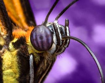 Butterfly Portrait - Proboscis Extended!