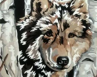 A wolf's Curiosity