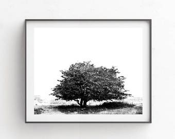 Black and white wall decor, Printable art, Single tree, Farmhouse decor, Wall art print, Stock photo, Digital photography, Country landscape
