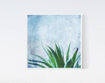 Succulent print, Cactus photo, 8x8 Printable arts, green wall art, Green art decor, Cactus wall art, Digital download cacti, Cacti lovers