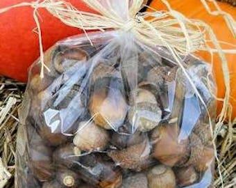 Dried Acorns and Caps | Dried Acorns | Acorns with Caps | Dried Decor