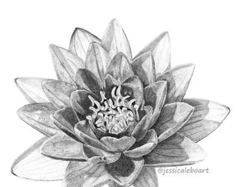 Water Lily Fine Art Greeting Card, Graphite Pencil Flower Drawing Print