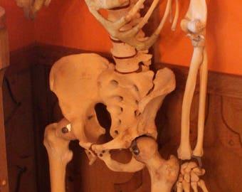 Real Human Skeleton