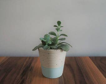 Concrete light blue Pot, planter, cache pot plant cactus or succulent