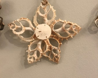 Sea Shell Ornament with Sand Dollar