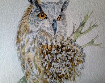 Long Eared Owl, muted colours, soft browns, greys and white. white mount 8 x 8, original painting, barn yard, woodland, spring watch, hunter