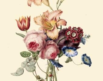 antique french botanical print bouquet peony pink rose fleur de lys lily tulip illustration digital download