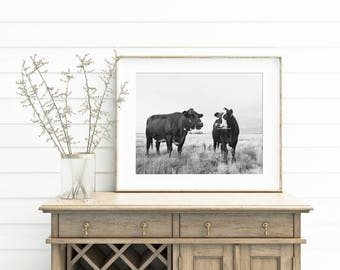 Chatty Cow Photograph in Black and White, Black and White Cattle Photography, Western Farm Art, Physical Print